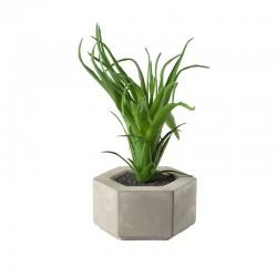 Planta Artificial Maxi Suculentas I - Deko Verde - Asa Selection