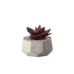 Planta Artificial Maxi Suculentas VII - Deko Rojo - Asa Selection