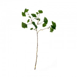 Ginkgo Branch 72cm – Deko Green - Asa Selection