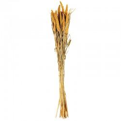 Ramo de Flores Secas Setarea - Dried Flowers Amarelo - Asa Selection ASA SELECTION ASA66314444