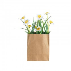 Daff In Paperbag Rectangular - Deko - Asa Selection | Daff In Paperbag Rectangular - Deko - Asa Selection
