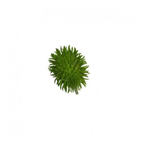 Elemento Decorativo - Chuchu Deko Verde - Asa Selection ASA SELECTION ASA66410444