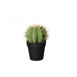 Florero Con Cactus 'Echino Grusani' Ø12,5cm - Deko Verde E Preto - Asa Selection