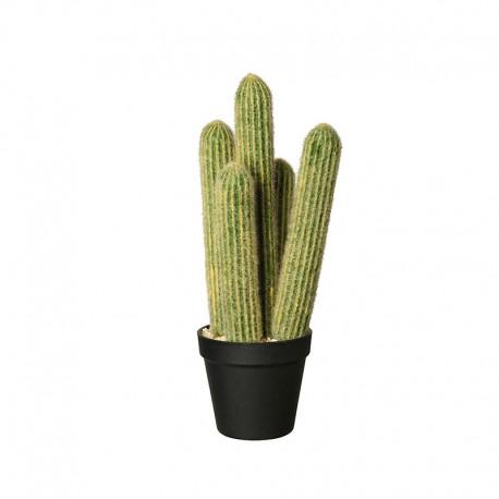 Vaso Com Cacto 'Cleisto Cactus' Ø12,5cm - Deko Verde E Preto - Asa Selection ASA SELECTION ASA66216444